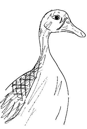 ink drawing of a duck?