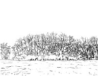 Clump of Trees Sketch