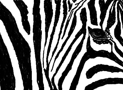 For Elaine, a Zebra